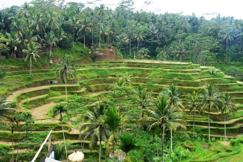 Pola uprawne - tarasy ryżowe